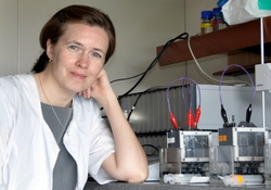 Dr. Larisa Kiseleva with several microbial fuel cells