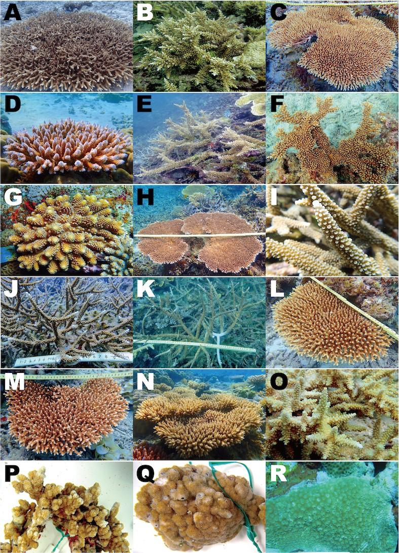 種類 サンゴ 環境省_串本海域公園_串本産造礁性サンゴ図鑑