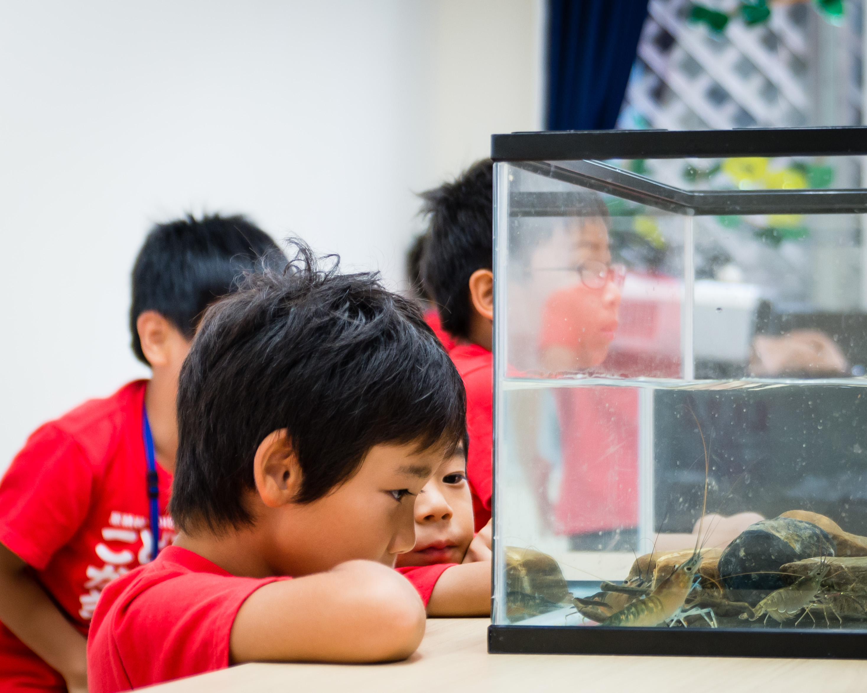 """Grades 1-2: """"Life in Water"""""""