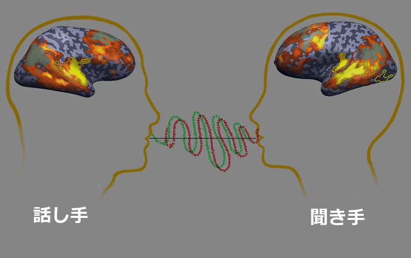 同期中の脳