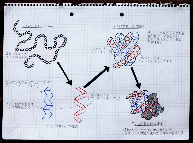 タンパク質のフォールディングとランダム行列理論