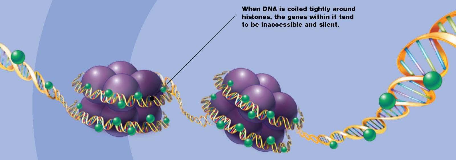 Histones Spooling DNA