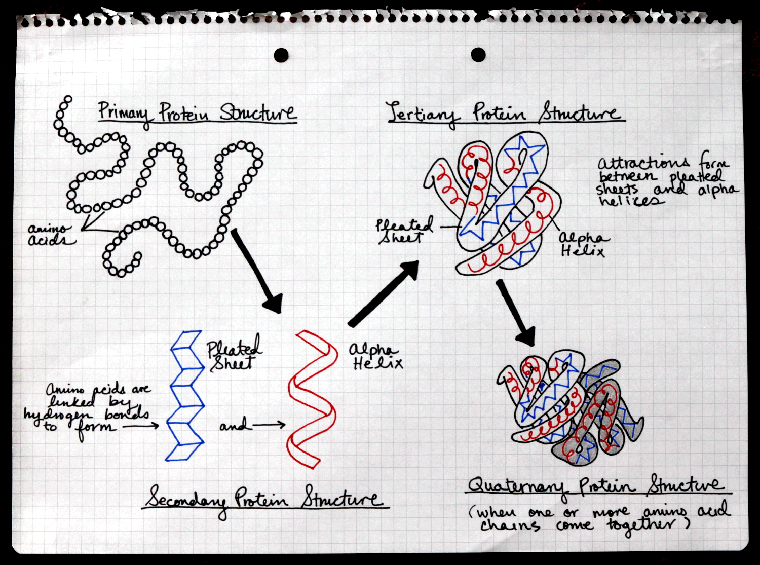 protein folding theory essay Introduction to protein folding - the process and factors involved  the theory is derived from the concept of cooperativity (the probability that a peptide chain.