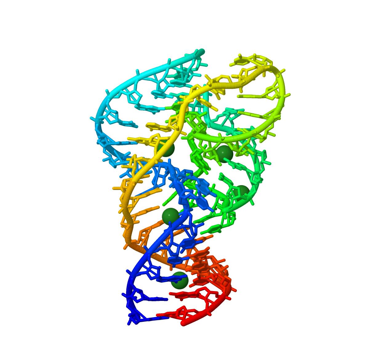 本研究で使用されたリボザイムの三次元構造
