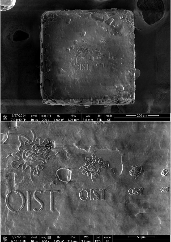 OIST Logos on Salt