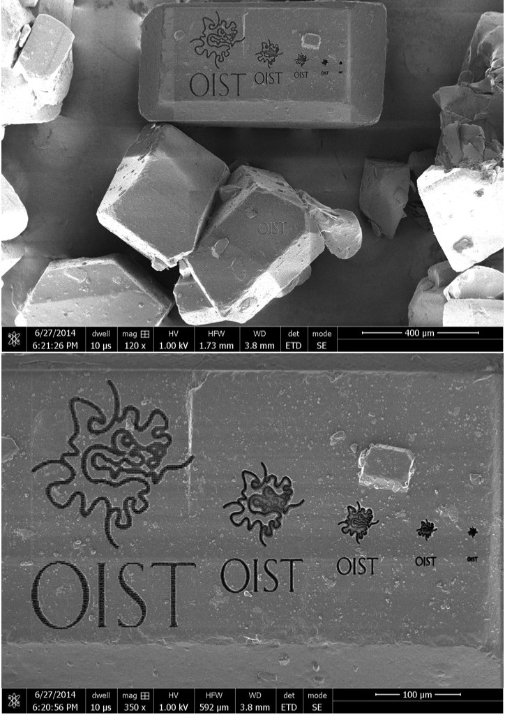 砂糖粒上のOISTロゴの拡大画像