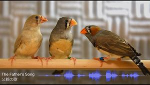 Development of the Juvenile Zebra Finch Song Using the Memory of the Father's Song