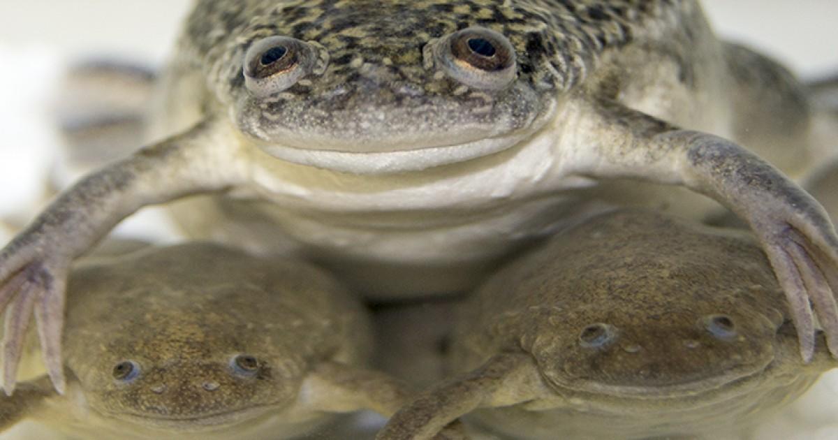 て カエル に いる 似