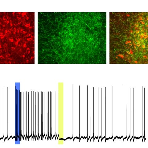 Control of serotonin neural activity by light