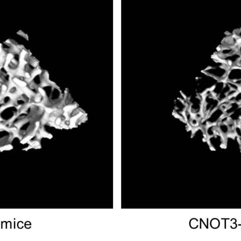 Three-dimensional micro-CT Images