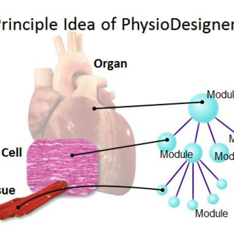 Principle Idea of PhysioDesigner