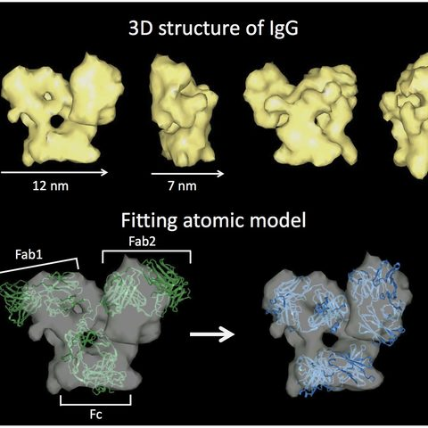Protein Tomography Models