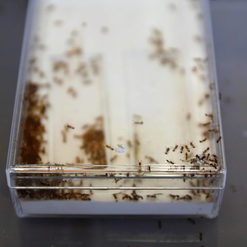 A Colony of Ants
