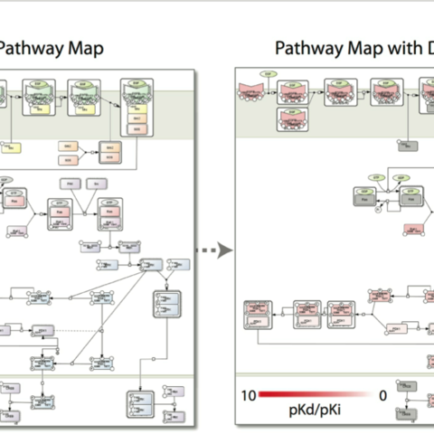 Protein Pathway Map