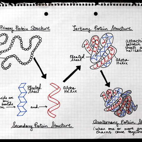 Protein Folding and Random Matrix Theory