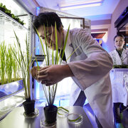 Studying epigenetic regulation of genes in Arabidopsis and rice